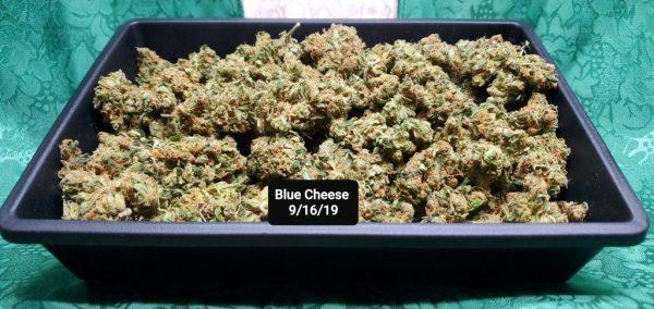 Blue Cheese Marijuana