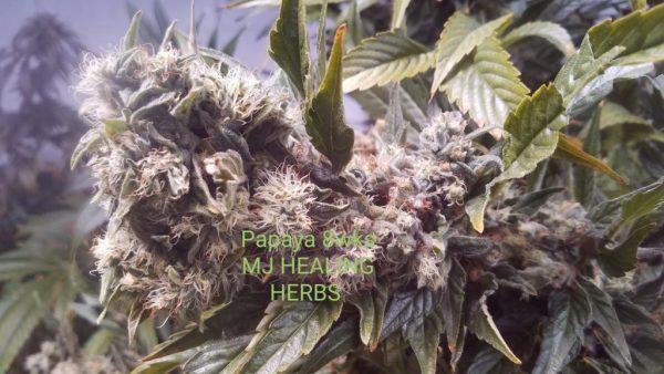 Marijuana Augusta