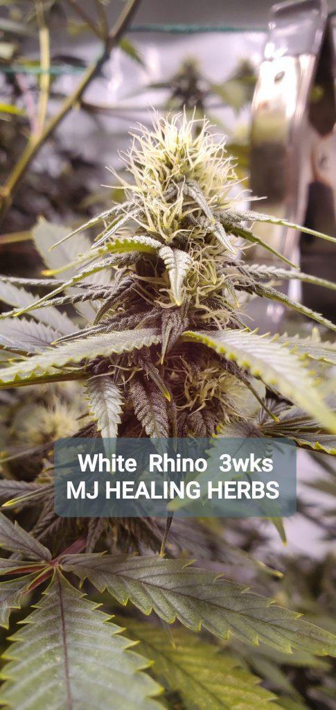 Delivery Medicinal Cannabis