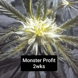 Coming Soon! <br>Monster Profit