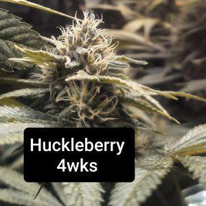 Coming Soon! <br>HulkBerry