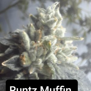 Coming Soon! <br>Runtz Muffin